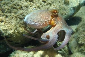 Onze problemen een octopus te begrijpen, geven een goede indruk van wat er nodig is om in de geest van een buitenaards wezen te kijken.