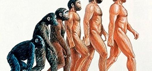 Van dit traditionele plaatje van de menselijke evolutie klopt maar weinig, weten we nu.