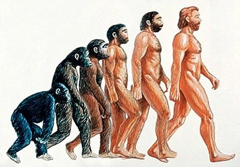 Van dit traditionele paradigma van de menselijke evolutie klopt maar weinig, weten we nu.
