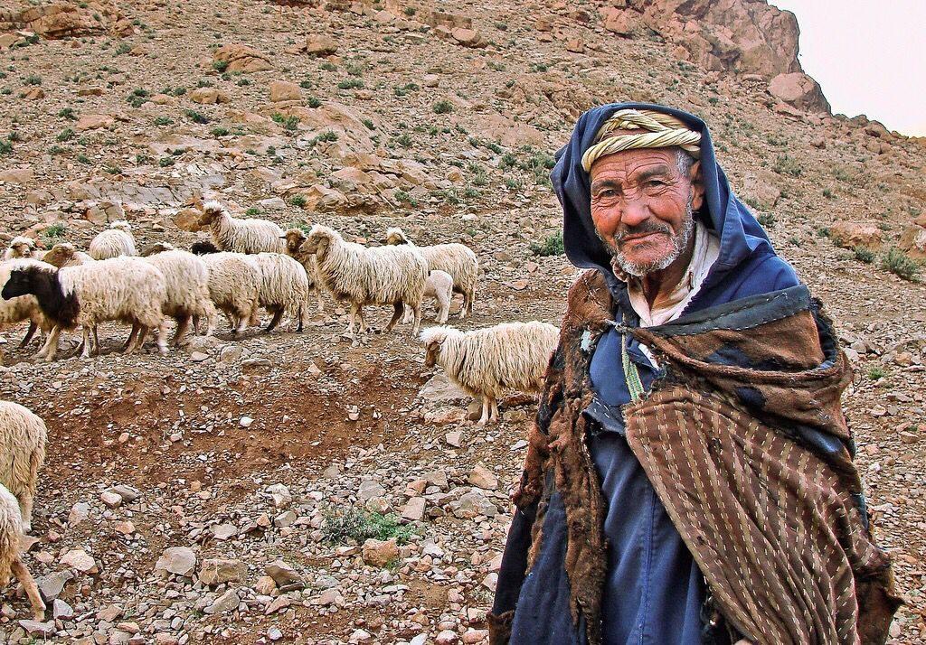 De Marokkaanse overheid ziet haar onderdanen als een schaapskudde, die ze in het buitenland kan laten grazen en vet kan mesten voor de slacht. Bron: Pinterest