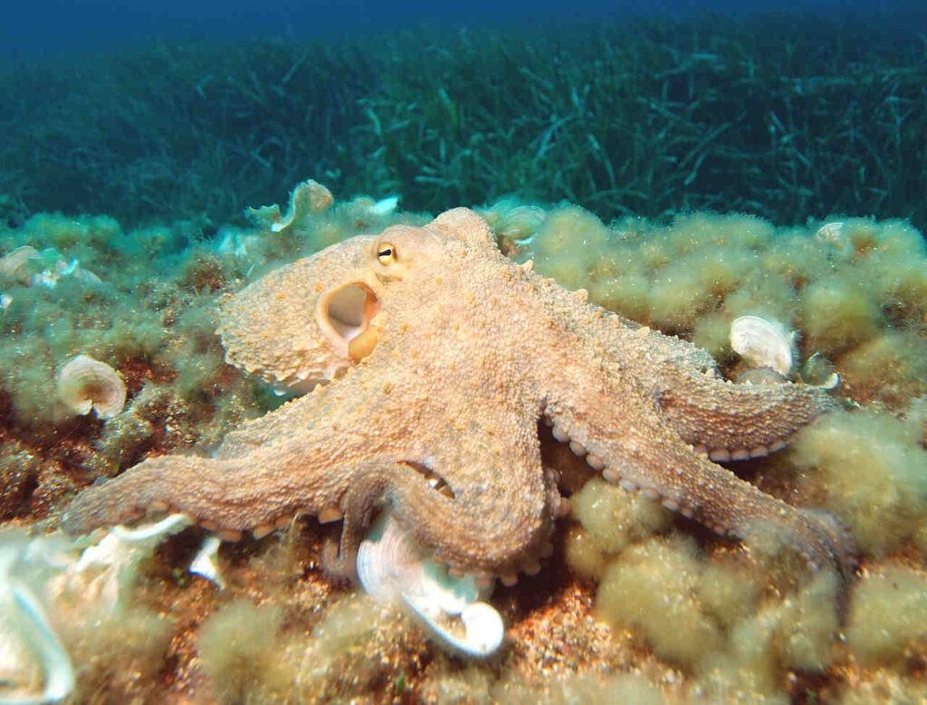 We delen onze planeet al met behoorlijk slimme water-aliens, zoals deze gewone octopus.